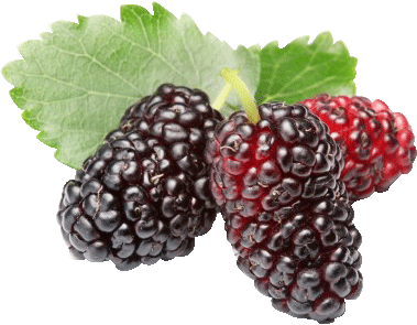 ... mulberry -- Flavors